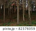 冬景色、杉の木の森2 82376059