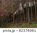 冬景色、杉の木の森1 82376061