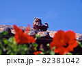 ハイビスカスの向こうの琉球赤瓦の屋根にのったシーサー 82381042