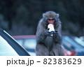 車のボンネットに乗り缶ジュースを飲みながらこちらを見つめるニホンザル 82383629