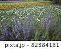 手前に紫色の花が咲く色とりどりのお花畑 82384161