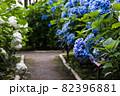 初夏のあじさいの花 千葉県 日本 82396881