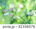 薄紅色の花2輪と白い小花に蜂が寄り添う光景 82398076