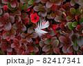 北アルプスの紅葉。草紅葉と白い羽。 82417341