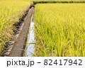 収穫前の水田 82417942
