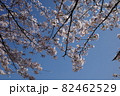 青空に映える花をつけた桜の枝 82462529