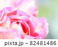 ピンクのバラの花びら 82481486