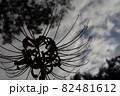 曇り空と彼岸花 82481612