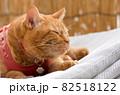 マットレスの上で昼寝する猫 82518122