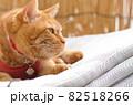 干したマットレスの上に乗る猫 82518266