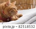 干したマットレスの上に乗る猫 82518532