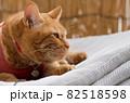 干したマットレスの上に乗る猫 82518598