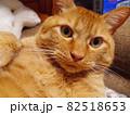 不満顔の猫 82518653