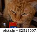 おやつを無心に食べる猫 82519007