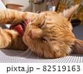 マットレスの上で昼寝する猫 82519163