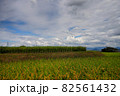 青空と雲と稲穂の風景 82561432