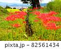 奈良県御所市で撮影した用水路と彼岸花 ② 82561434