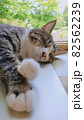 窓辺で眠る猫のアップ 82562239