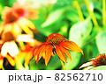 """パステル調 """"エキナセア 花 植物"""" イラストイメージ 82562710"""