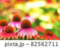 """パステル調 """"エキナセア 花 植物"""" イラストイメージ 82562711"""