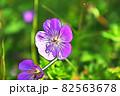 """パステル調 """"フウロソウ 花 植物"""" イラストイメージ 82563678"""