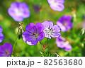 """パステル調 """"フウロソウ 花 植物"""" イラストイメージ 82563680"""