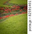 奈良県の絶景 一言主神社の彼岸花 82591401
