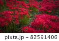 奈良県の絶景 一言主神社の彼岸花 82591406