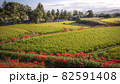 奈良県の絶景 一言主神社の彼岸花 82591408