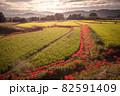 奈良県の絶景 一言主神社の彼岸花 82591409