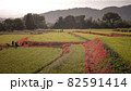 奈良県の絶景 一言主神社の彼岸花 82591414