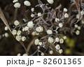 寒い冬に耐え春を待つ霜の降りた植物 82601365