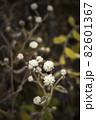 寒い冬に耐え春を待つ霜の降りた植物 82601367