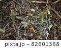 寒い冬に耐え春を待つ霜の降りた植物 82601368