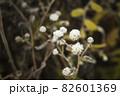 寒い冬に耐え春を待つ霜の降りた植物 82601369