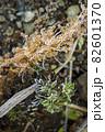 寒い冬に耐え春を待つ霜の降りた植物 82601370