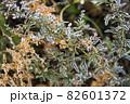 寒い冬に耐え春を待つ霜の降りた植物 82601372