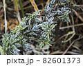 寒い冬に耐え春を待つ霜の降りた植物 82601373