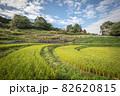奈良県 稲渕の棚田 彼岸花 82620815