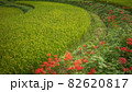 奈良県 稲渕の棚田 彼岸花 82620817