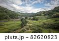 奈良県 稲渕の棚田 彼岸花 82620823