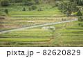 奈良県 稲渕の棚田 彼岸花 82620829