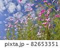 (秋のイメージ)コスモス 82653351