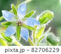 ハーブ、雨の後の雫が滴る青花ボリジのクローズアップ 82706229