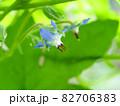 水色に咲くハーブボリジの花 82706383