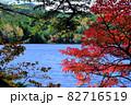 北八ヶ岳白駒池の湖畔に映える紅葉 82716519