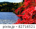 北八ヶ岳白駒池の湖畔に映える紅葉 82716521