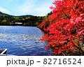北八ヶ岳白駒池の湖畔に映える紅葉 82716524