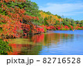 北八ヶ岳白駒池の湖畔に映える紅葉 82716528
