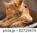 すだれの上で毛繕いする猫 82729474